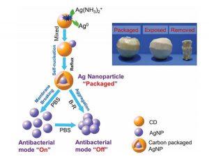Cerotti stampati in 3d contro i batteri resistenti ai farmaci 03